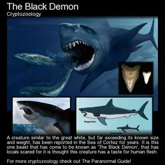 "The Black Demon. ""Described as similar in appearance to a Great White, the creature is said to be dark black in appearance, rather than the grey shade that great whites tend to have on their dorsal area. It is said to be anywhere between 20-60 feet long, and the size of a schoolbus..."" Read more here: http://www.theparanormalguide.com/blog/the-black-demon"