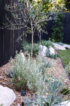 My Backyard Makeover — Adore Home Magazine Australian Garden Design, Australian Native Garden, Garden Edging, Garden Beds, Sloped Garden, Landscaping Supplies, Backyard Landscaping, Back Gardens, Outdoor Gardens