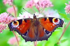 Butterflies in Freedom XIV. by Juan Dorado on 500px