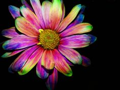 Rainbow Dashed different view by callievamp.deviantart.com on @deviantART