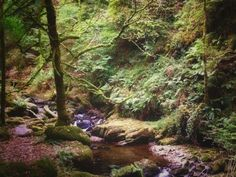 Gorgeous forest in the Ring of Kerry on the west coast of Ireland