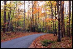 """Visual #BibleVerseoftheDay: Roaring Fork Motor Nature Trail, Great Smoky Mountains National Park, Tennessee and Psalm 25:4-5 """"Show me your ways, Lord, teach me your paths. Guide me in your truth and…"""" CLICK THE PHOTO to be blessed with the complete passage. http://visualverse.thecreationspeaks.com/guide-me/"""