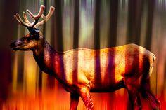 now fine art & photography Fine Art Photography, Moose Art, Digital Art, Elk, Gallery, Artist, Painting, Website, Art Photography