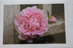 Pink Peony and Fence Photo Note Card Peony  Blank Note by manukai