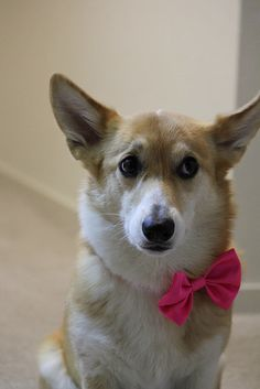 "Corgi: see ""innocence"" 
