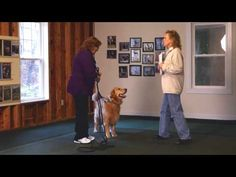 Introduction to AKC Canine Good Citizen Test - YouTube