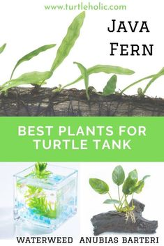 best live plants for turtle tank