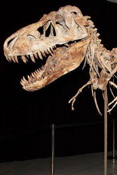 Nicolas Cage Returns Stolen Dinosaur Skull To Mongolia - BuzzFeed News