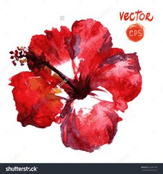 Red Hibiscus flower watercolor - Поиск в Google