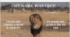Yolanda Kakabadse WWF: End YOUR Trophy Hunting Safaris in Partnership with USA TH Dallas Safari Club