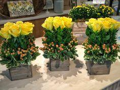 20 of our signature mini Rose Hedge arrangements. Rose Hedge, Mini Roses, Hedges, Floral Design, Plants, Floral Patterns, Living Fence, Plant, Shrubs