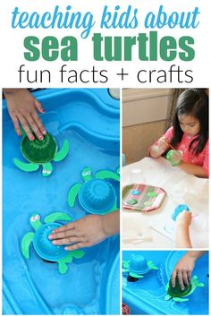 10 Fun Sea Turtle Facts for Kids + A Sea Turtle Craft that Floats! The best way to teach your children about endangered animals is to get hands on! Here are fun sea turtle facts for kids plus a sea turtle craft for kids! Turtle Facts For Kids, Sea Turtle Facts, Preschool Crafts, Fun Crafts, Crafts For Kids, Preschool Centers, Ocean Crafts, Kids Diy, Animal Projects