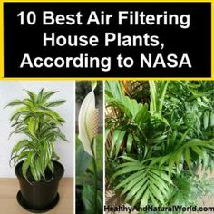 10 Best Air Filtering House Plants, According to NASA