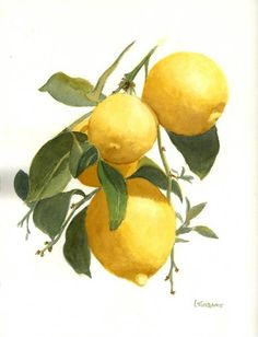 """Lemons"" by Lenora Turbanic, Wheeling // Botanical watercolor painting of lemons on the tree. // Imagekind.com -- Buy stunning fine art prints, framed prints and canvas prints directly from independent working artists and photographers."