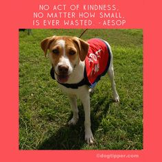 "Your gifts of kindness to your local shelter can take the form of adoption, sharing adoptables on social media, fostering, volunteering, or donating. Craft ""adopt me"" vests to help adoptables find a forever home; you'll find deeply discounted materials at your local #TuesdayMorning store!"