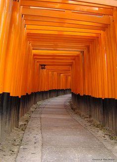Grey and Orange - Fushimi Taisha temple Orange Aesthetic, Aesthetic Colors, Aesthetic Pics, Minimal Photography, Color Photography, Orange Art, Orange Color, Visual Aesthetics, Orange Design