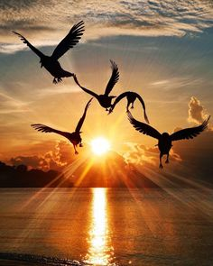 Freedom vibes Seagulls on a morning sunrise Photo by – All Pictures Sunset Photography, Amazing Photography, Landscape Photography, Photography Ideas, Morning Photography, Poster Photography, Travel Photography, Wallpaper Travel, Nature Wallpaper