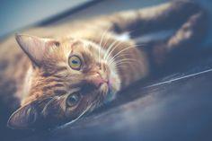 Drapanie jest tak nierozłącznie związane z kotem jak mruczenie czy wylegiwanie się w słońcu. Nie ma sensu z nim walczyć ; ) Zamiast tego lepiej jest wybrać dobry drapak dla kota. Zapewni naszemu pieszczochowi miejsce, w którym będzie mógł dać upust swojej potrzebie drapania – bez uszczerbku dla naszych mebli i bez szkody dla naszych … Continue reading Drapak dla kota