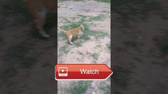 😸 crazy cat animal videos 😹 😼 on Pet Lovers 🐼