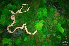 PlantedDesign-Moss-Wall-SF-TaylerCox-15.jpg