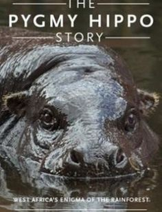 The Pygmy Hippo Story West Africa's Enigma of the Forest free download by Phillip T. Robinson Knut M. Hentschel Gabriella L. Flacke ISBN: 9780190611859 with BooksBob. Fast and free eBooks download.  The post The Pygmy Hippo Story West Africa's Enigma of the Forest Free Download appeared first on Booksbob.com.