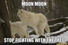 animal memes moon moon results - ImageSearch Animal Jokes, Funny Animal Memes, Funny Animals, Cute Animals, Funny Memes, Dog Quotes Funny, Dog Memes, Funny Dogs, Funny Husky