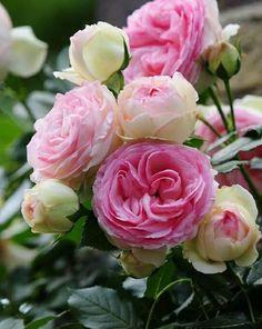 @Sitaravirgo @syedazhar30 @patriotahmed @lalarukh6 good afternoon