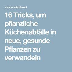 16 Tricks, um pflanzliche Küchenabfälle in neue, gesunde Pflanzen zu verwandeln