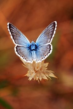 ~~like an angel ~ magical butterfly bokeh by hans solcer~~