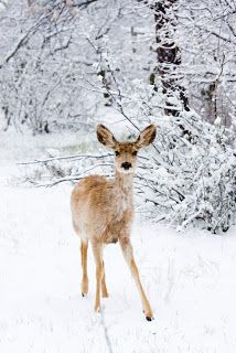 Read 50 Winter Poems, with haikus about winter, snow poems, winter poems for… I Love Winter, Winter Snow, Winter Christmas, Christmas Deer, Hello Winter, Christmas Quotes, Beautiful Creatures, Animals Beautiful, Cute Animals