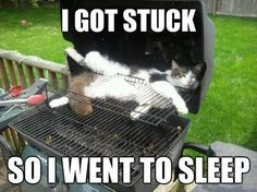 I got stuck…so I just went to sleep. Sleepy Kitty!  Hope nobody lights the Barbey Q!