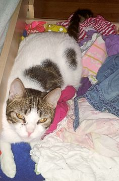 White & Tiger Cat lost in Norwalk, CT. Name: Tuesday. Missing for about a week.  Please, contact (203) 832-6115 if seen or found.