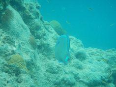 Snorkelling St Maarten Creol Rock