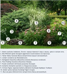 Low maintenance plant combination with varied foliage and texture.