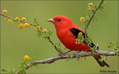 images of beautiful birds | Beautiful Birds12 Beautiful birds that looked amazing in flight with ...