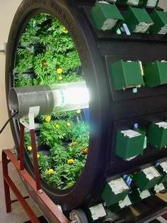 1000 Images About Hydroponic Gardening On Pinterest