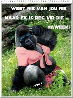 REG VIR DIE NAWEEK Funny Weekend Quotes, Weekend Humor, Friday Humor, Funny Friday, Family Guy Quotes, Afrikaanse Quotes, Real Estate Humor, Morning Humor, Funny Morning