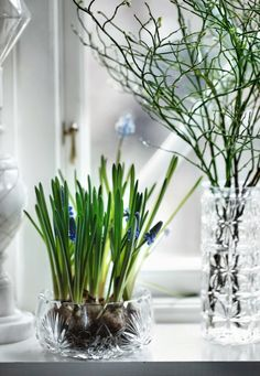 décoration appui de fenetre intérieur en fleurs à bulbes et récipients en cristal
