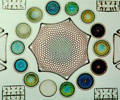 Diatom art.  The art of single cellular algae. You can only see this under the microscope.
