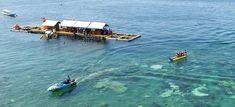 Paket Gathering Kantor di Banyuwangi 2 Hari 1 Malam - A - paket wisata banyuwangi, paket tour banyuwangi Backpacker, Snorkeling, Underwater, National Parks, Boat, Tours, Diving, Dinghy, Under The Water