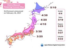 Cherry Blossom Flowering Forecast Map