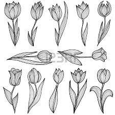 tulip tattoo - Google-søgning