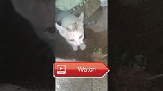 😸 Funny cat 😼 Dakhy ji cat ka kamal 😽 on Pet Lovers 😻