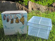 Chrysalis Kit - delivered throughout Australia - wonderful, affordable way to watch the life cycle of butterflies or silk worms in your own home / classroom!!! Australia only. Accessories can be shipped internationally but no butterflies/insects sorry.