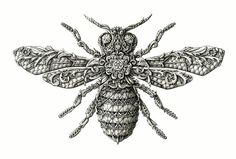 Painstakingly Intricate Floral Drawings Of Insects By Alex Konahin
