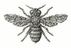 nghệ sĩ, drawing, côn trùng, bút chì, ấn độ, latvia, bút mực, mực in, hoa văn, cổ điển, việt designer, demilked