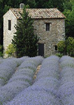 Lavender field ~ Provence, France