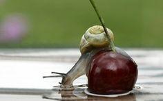 jagody, wiśnie, ślimak, woda, odbicie, zbliżenie