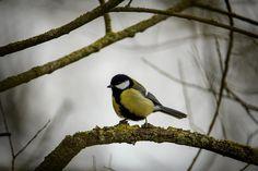 #wildlifephotography #luxembourg #igerslux #wanderlust #wildlife #nature #naturelovers #naturephotography #outdoors #outsideisfree #ic_nature #ignature #ignaturefinest #ig_captures_nature #instanaturelover #allnatureshots #birding #birdwatching #ornithology #eye_spy_birds #dezpx_birding #wearetheluckyones #dezpx_birding (hier: Bergem)