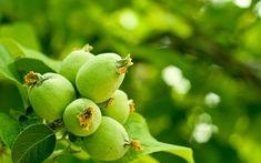 O lucrare pe care o fac cei care-şi iubesc cu adevărat pomii din livadă. Răsplata? Pomi sănătoşi, producţii anuale echilibrate, fructe mai mari, mai frumoase şi mai rezistente la păstrare. Paradis, Solar, Home And Garden, Face, Gardening, Tudor, House, Agriculture, Green
